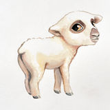 Hand painted watercolor baby lamb illustration, cute soft adorable sheep Royalty Free Stock Image