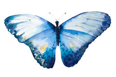 Hand Painted watercolor butterfly Stock Photos