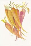 Hand painted watercolor of a bunch of carrots Royalty Free Stock Photo