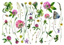 Hand Painted Watercolor Collection of Clover Wildflowers