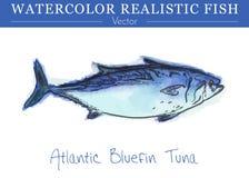 Hand painted watercolor edible fish. Vector design Stock Photos