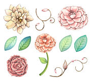 Hand painted watercolor flowers clip art set. stock illustration