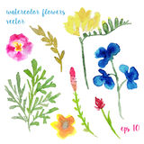 Hand painted watercolor flowers. Set of unique plants. Royalty Free Stock Photo