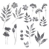 Watercolor graphite floral set. Hand painted watercolor graphite set of floral elements for design vector illustration