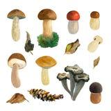 Mushrooms watercolor illustration Stock Image