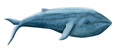 Free Hand-painted Watercolor Illustration Of Blue Whale Royalty Free Stock Image - 172678906