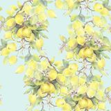 Hand painted watercolor illustration. seamless pattern with lemon tree branch elements. vector illustration