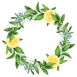 Hand-painted Watercolor Lemons Wreath Royalty Free Stock Photos