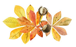 Hand painted watercolor mockup clipart template of autumn leaves Stock Photo