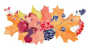 Hand painted watercolor mockup clipart template of autumn leaves Royalty Free Stock Images
