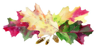 Hand painted watercolor mockup clipart template of autumn leaves Stock Photos
