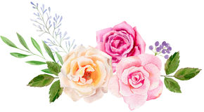 Hand painted watercolor mockup clipart template of roses Royalty Free Stock Photos