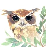 Hand painted watercolor. The owl with big eyes on the tree. Hand painted watercolor art illustration royalty free illustration