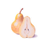 Hand painted watercolor pears, yellow pear, whole and cutted pea Stock Images
