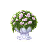 Hand painted watercolor roses in the ceramic vase isolated Stock Image