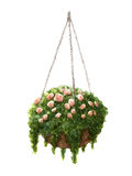Hand painted watercolor roses in the hanging pot isolated Royalty Free Stock Photo