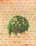 Hand painted watercolor roses in the hanging pot Stock Photos
