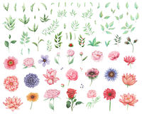Hand painted watercolor Set of flowers and leaves isolated on white background Stock Images
