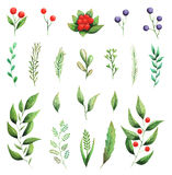 Hand painted watercolor Set of green leaves and berries isolated on white background Royalty Free Stock Photo