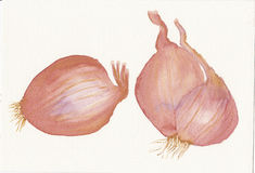 Hand painted watercolor of three shallots Royalty Free Stock Photos