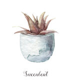 Hand painted watercolor succulent plants in pot. Perfect for cards, labels, invitations, web, scrapbook, flyer etc Stock Photo