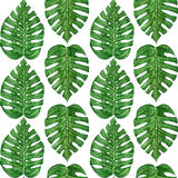 Hand painted watercolor tropical monstera leaf seamless pattern Royalty Free Stock Image