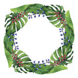 Hand-painted Watercolor Tropical Wreath Royalty Free Stock Images