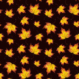 Hand painted watercolour autumn background of falling leaf maple. Watercolor seamless pattern autumn leaves maple, hand painted watercolour autumn background of Royalty Free Stock Photography