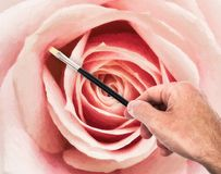 Hand Painting Rose Royalty Free Stock Images