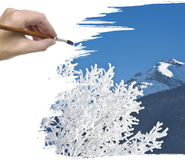 Hand painting snow covered tree Royalty Free Stock Images