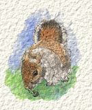A hand painting of a squirrel in ink and watercolor. Royalty Free Stock Images