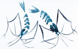 Two shrimps drawn by blue watercolors stock photos