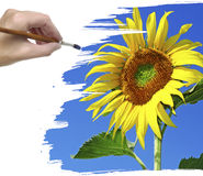 Hand painting sunflower Royalty Free Stock Photo