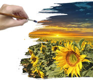 Hand painting sunflower field Royalty Free Stock Photo