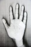 Hand palm Royalty Free Stock Photo