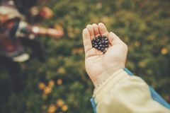 Hand palm holding blueberries on background of sunny mountains a stock photos