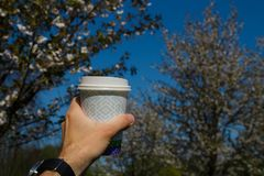 Hand with paper cup of coffee - Colorful sakura cherry blossom in a park in Riga, Eastern European capital city of royalty free stock photography
