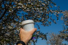 Hand with paper cup of coffee - Colorful sakura cherry blossom in a park in Riga, Eastern European capital city of stock photography