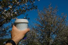 Hand with paper cup of coffee - Colorful sakura cherry blossom in a park in Riga, Eastern European capital city of stock image
