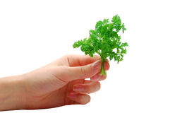 Hand with parsley. On a white background Royalty Free Stock Photography