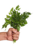 Hand with parsley Stock Images