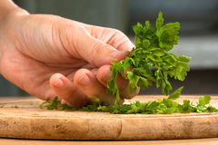 Hand with parsley prepared for chopping Royalty Free Stock Image