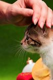 Hand patting kitten. Female hand patting a happy cut kitten on green background. Studio shot Stock Photos