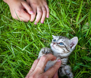 Hand patting kitten Royalty Free Stock Image