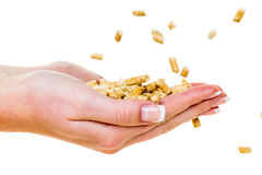 Hand with pellets as old natie energy Royalty Free Stock Images