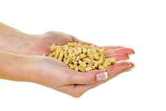 Hand with pellets as old natie energy Stock Photo