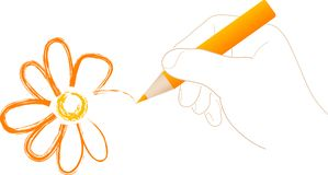 Hand with pencil. Draw the daisy - vector illustration Stock Photo