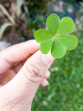 Hand of people giving leaf clover. On blur background Royalty Free Stock Photography
