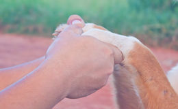 Hand people and hand dogs. Man and dog holding hands with affection Stock Photo