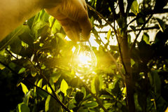 Hand of person holding light bulb for idea for success or solar Royalty Free Stock Image